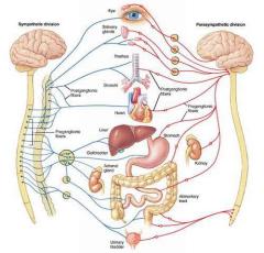 Osteopathie Lotuszen